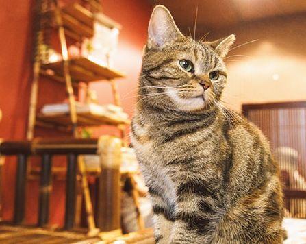 猫カフェ女性33歳